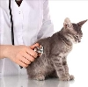 Ветеринарные клиники в Богучанах